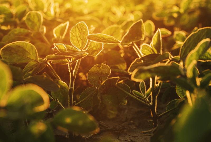Preparāti nesatur ĢMO